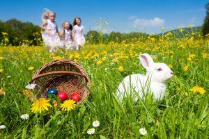 Chasse aux œufs le lundi 22 avril…